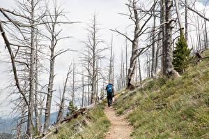 Bilder Park Vereinigte Staaten Yellowstone Weg Bäume Wanderung Yellowstone national park