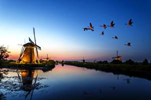 Bilder Flusse Abend Vögel Entenvögel Windmühle Natur