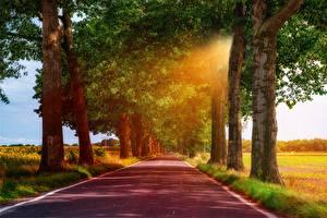 Bilder Straße Bäume Lichtstrahl Gras Asphalt Natur