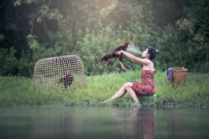 Fotos Hahn Asiatische Gras Spritzwasser Brünette Sitzt junge frau