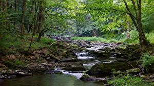 Bilder Steine Wälder Vereinigte Staaten Flusse Bach Laubmoose West Virginia, Monongahela river Natur