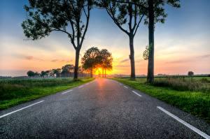 Bilder Sonnenaufgänge und Sonnenuntergänge Straße Gras Bäume Asphalt Natur