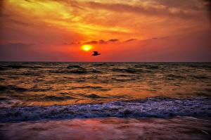 Fotos Sonnenaufgänge und Sonnenuntergänge Meer Vögel Wasserwelle Natur