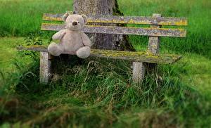 Images Teddy bear Grass Bench Sitting