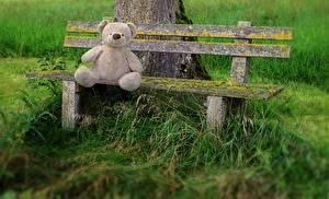 Hintergrundbilder Teddy Gras Bank (Möbel) Sitzend