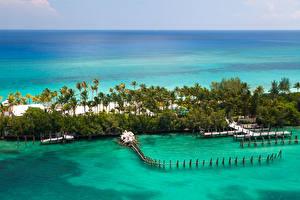Pictures Tropics Sea Resorts Berth Coast Palm trees Bahamas Nature