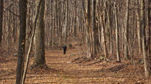 Hintergrundbilder USA Wälder Herbst Weg Blattwerk Gehen Appalachian Mountains, Virginia Natur