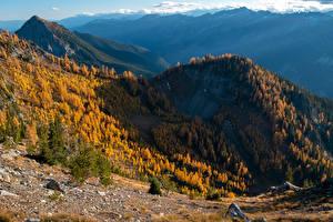 Hintergrundbilder USA Gebirge Herbst Wälder Washington Carne Mountain Natur