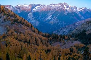 Bilder Vereinigte Staaten Gebirge Wälder Herbst Washington Carne Mountain Natur