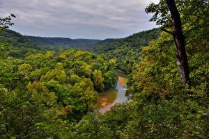 Hintergrundbilder USA Park Wälder Flusse Baumstamm Mammoth Cave National Park