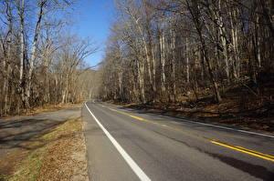 Fotos Vereinigte Staaten Straße Herbst Asphalt Bäume Shenandoah National Park, Virginia Natur