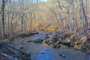 Hintergrundbilder USA Steine Wälder Herbst Bach Bäume Ridley Creek State Park, Pennsylvania Natur