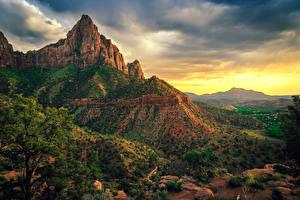 Bilder Vereinigte Staaten Zion-Nationalpark Park Felsen Ast Strauch