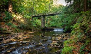 Hintergrundbilder Vereinigtes Königreich Flusse Brücken Herbst Bäume River Neb Natur