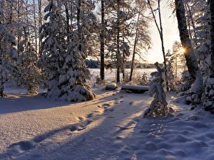 Papel de Parede Desktop Invierno Neve árvores Picea Raios de luz Naturaleza