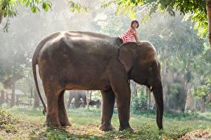 Hintergrundbilder Asiatische Elefanten Kleine Mädchen Tiere