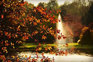 Image Autumn Branches Foliage Nature
