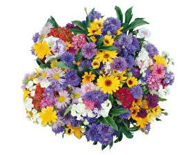 Fotos Blumensträuße Kornblume Gänseblümchen Weißer hintergrund Blumen