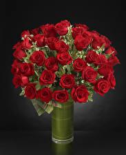 Fondos de escritorio Ramos Rosas Fondo gris Jarrón Rojo flor