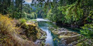Bilder Kanada Wälder Flusse Ast Cowichan River Natur