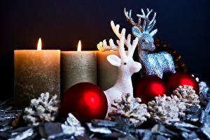 Fotos Neujahr Hirsche Kerzen Feuer Horn Kugeln Zapfen