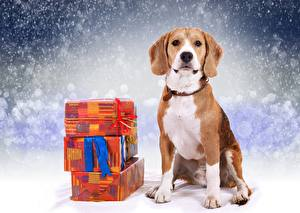 Wallpaper New year Dogs Beagle Gifts
