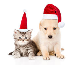 Wallpapers New year Dogs Cats White background Two Kitty cat Winter hat Retriever Puppy animal