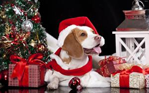Picture Christmas Dog Winter hat Balls Gifts Bow knot Tongue Beagle animal