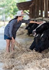 Bilder Kühe Asiatische Heu Der Hut Brünette Tiere Mädchens