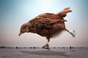 Hintergrundbilder Kreativ Vögel Haushuhn Schlittschuh
