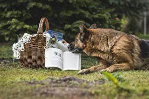 Fotos Hunde Shepherd Weidenkorb Buch Tiere