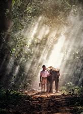 Hintergrundbilder Elefanten Asiatische Nebel Weg Junge Kinder