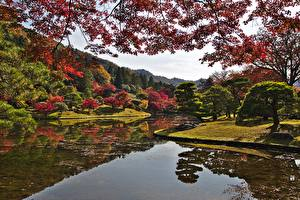 Image Kyoto Japan Autumn Parks Gardens Pond Branches Trees Nature