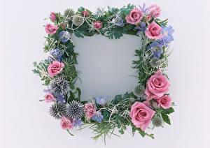 Fotos Rose Lilien Levkojen Weißer hintergrund Vorlage Grußkarte Blumen