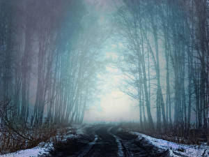 Picture Russia Siberia Forests Roads Winter Trees Fog Snow Nature