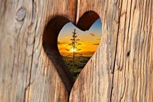 Bilder Sonnenaufgänge und Sonnenuntergänge Bretter Herz Fichten