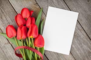 Bilder Tulpen Rot Bretter Blatt Papier Vorlage Grußkarte Blumen