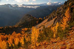 Bilder Vereinigte Staaten Gebirge Herbst Bäume Carne Mountain Natur