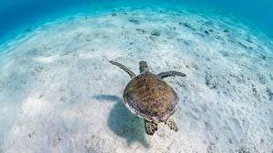 Wallpaper Underwater world Turtles