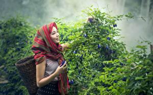 Fotos Asiatische Strauch Lächeln Weidenkorb Nebel Mädchens