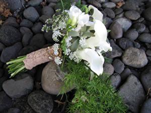 Hintergrundbilder Sträuße Drachenwurz Freesien Weiß Blumen