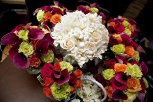 Bilder Sträuße Rosen Calla palustris Blumen