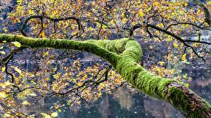 Pictures Branches Moss Nature