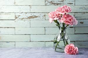 Bilder Nelken Rosa Farbe Vase