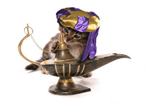 Image Cat White background Funny Kittens Hat Genie Animals