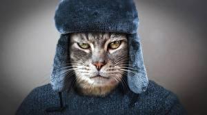 Bilder Katze Starren Schnauze Schnurrhaare Vibrisse Mütze Stirnrunzeln Russische Tiere
