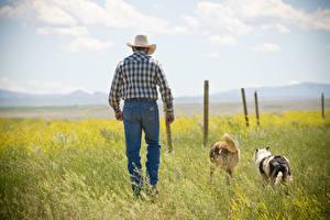 Bilder Hund Mann Gras Cowboy Der Hut Jeans Tiere
