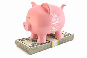 Hintergrundbilder Dollars Banknoten Papiergeld Weiß Englisch Sparschwein 3D-Grafik