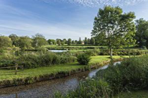 Bilder England Flusse Strauch Bäume Stoke Charity River Dever Natur