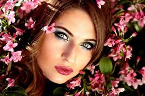Hintergrundbilder Augen Lippe Braunhaarige Gesicht Starren Make Up Schönes Mädchens